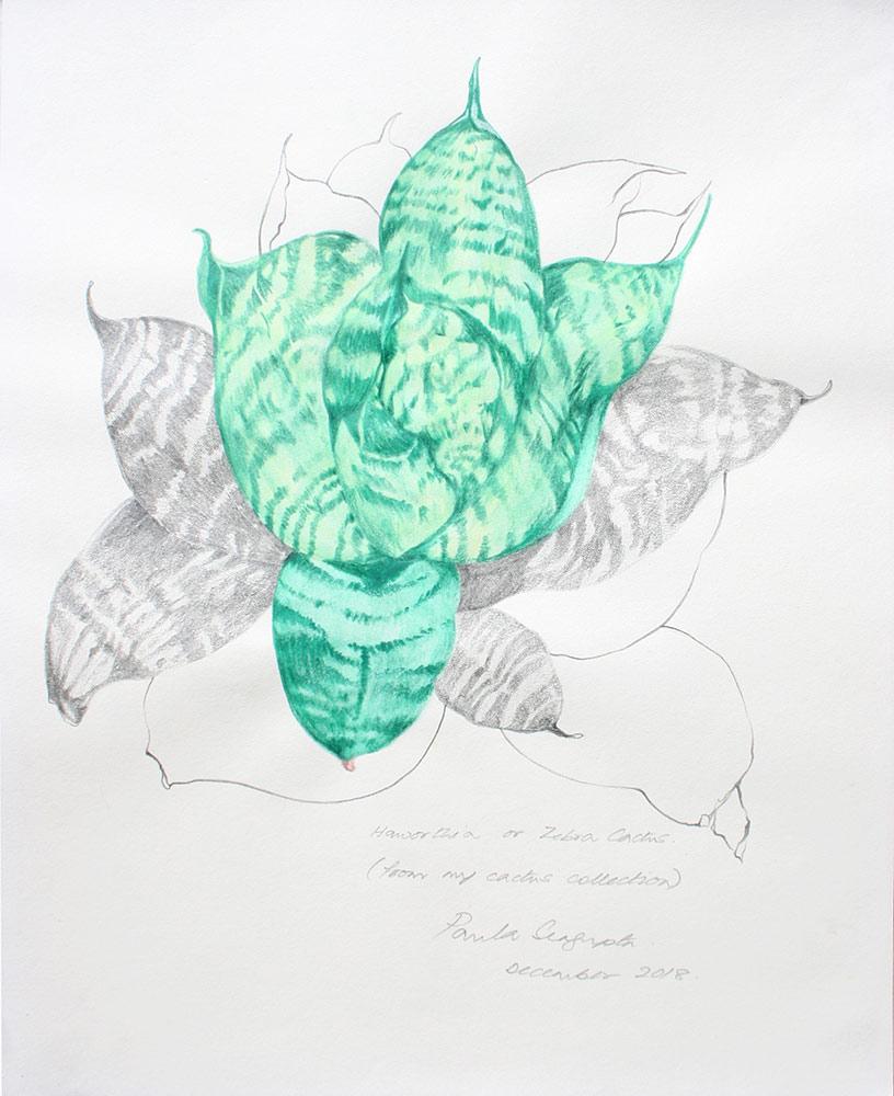 The garden of unreason - The cactus drawing 5-Paula