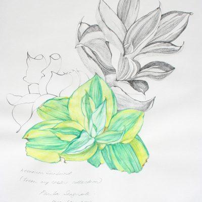 The garden of unreason - The cactus drawing 4-Paula