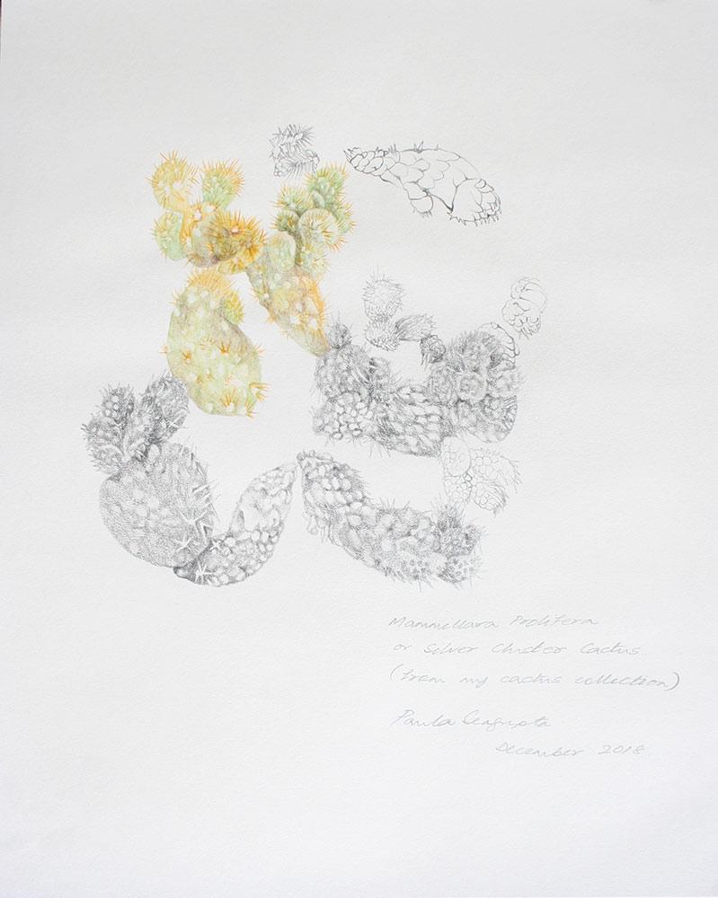 The garden of unreason - The cactus drawing-Paula