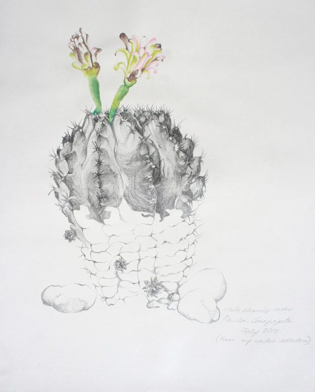 The garden of unreason - The cactus drawing 6-Paula