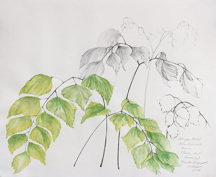 From the fernery-4-Paula-Sengupta