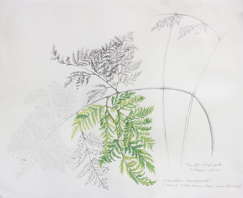 From the fernery-2-Paula-Sengupta