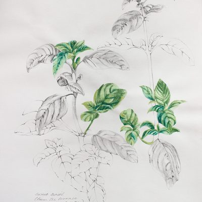 From the terrace garden-1-Paula-Sengupta