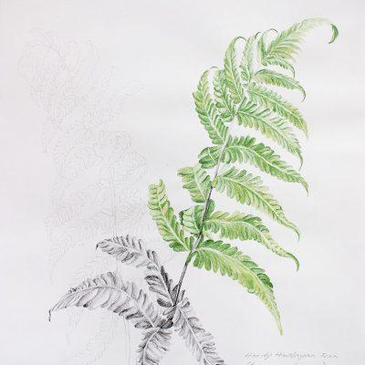 From the fernery-5-Paula-Sengupta