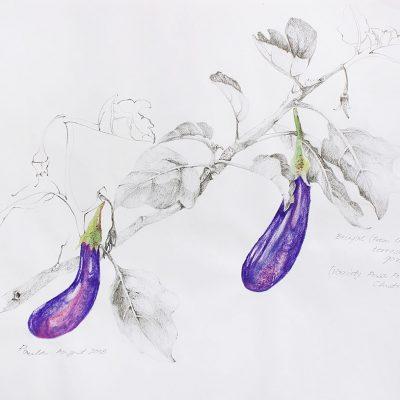 From the terrace garden-2-Paula-Sengupta