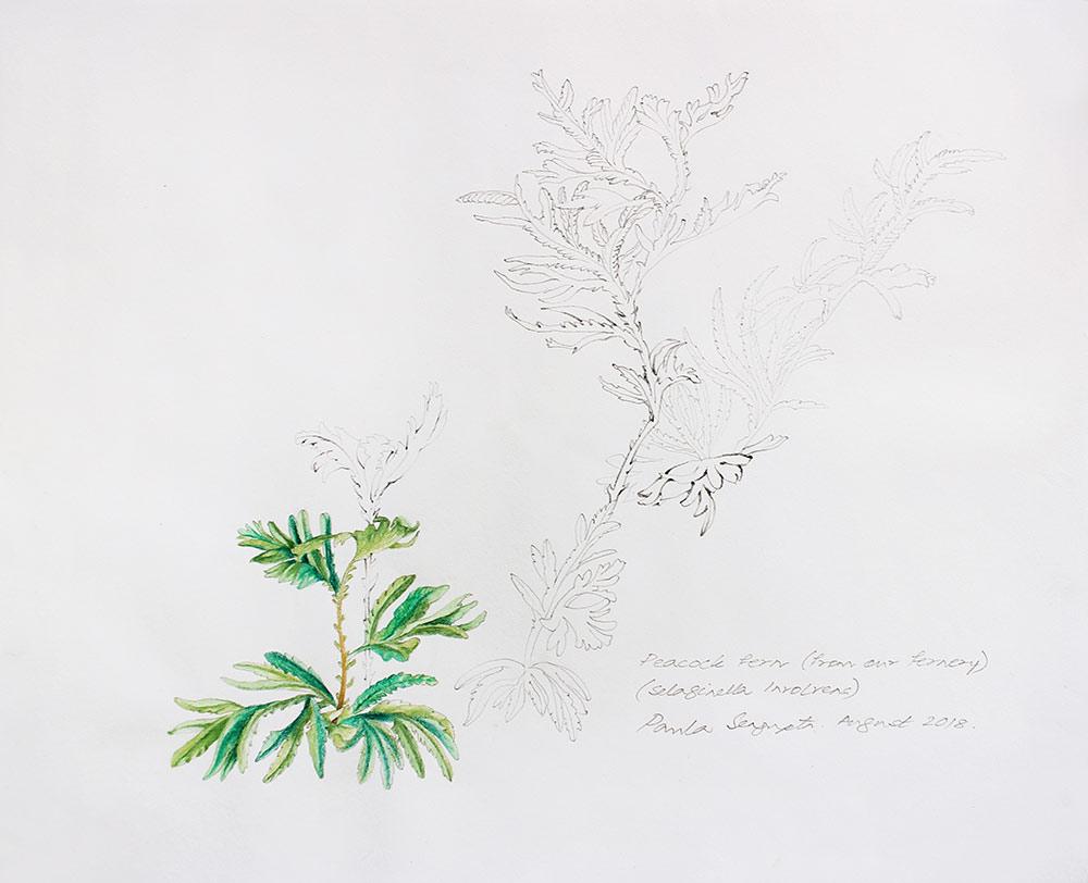 From the fernery-1-Paula-Sengupta