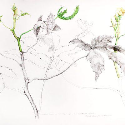 From the Vegetable Patch-1-Paula-Sengupta